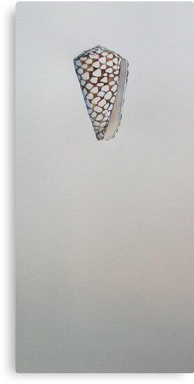 conchiglia - shell © 2010 patricia vannucci  by PERUGINA
