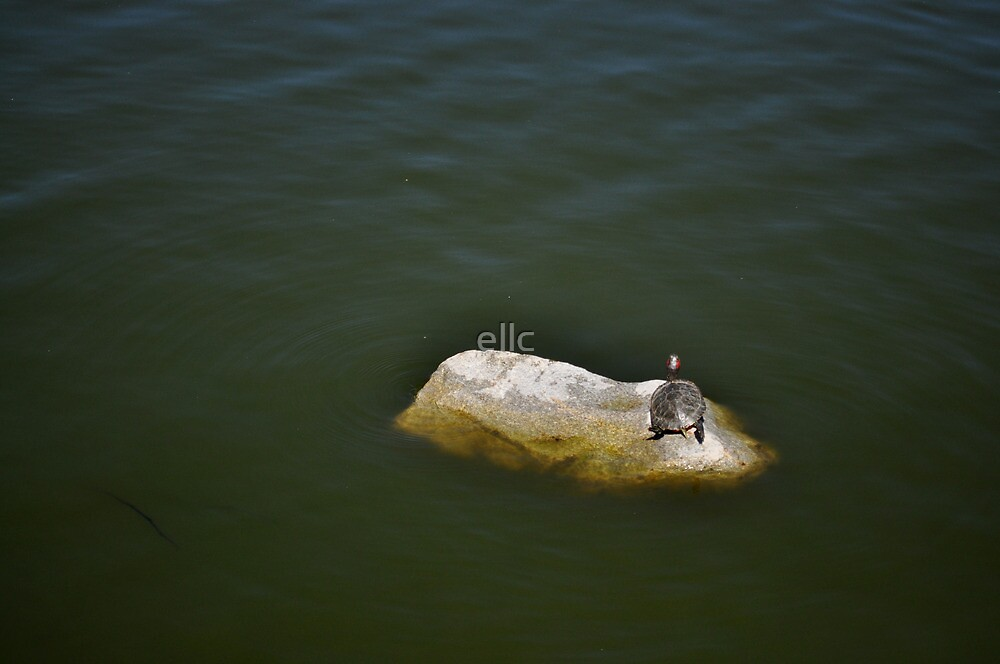 Lone Turtle by ellc