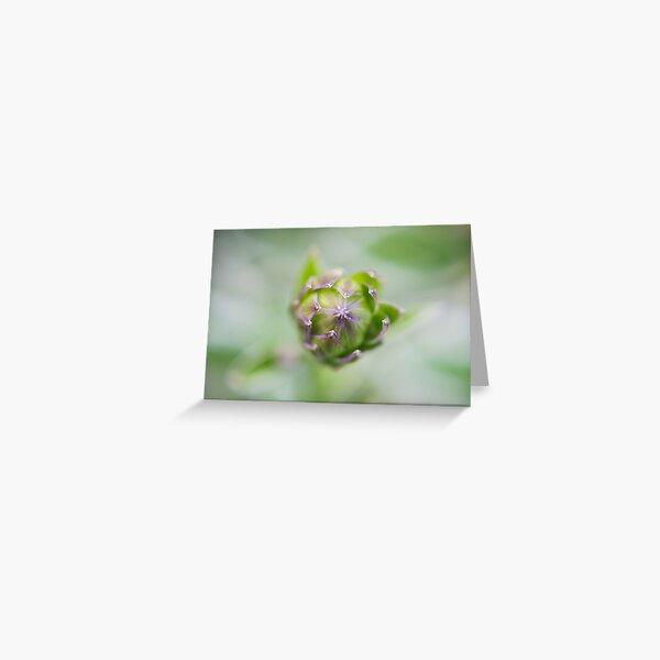 Growing Flower Greeting Card