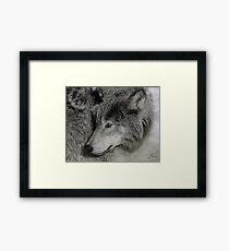 Unperturbed Timber Wolf Framed Print