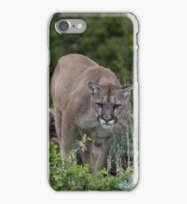 Cougar looking for dinner iPhone Case/Skin