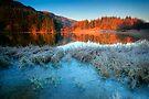 Trossachs Winter Light by David Mould