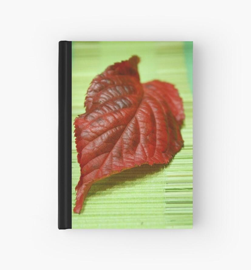 Blaze of colour by Jeanne Horak-Druiff