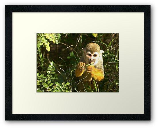 Spider Monkey on Monkey Island by K D Graves Photography