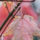 Maple Leaf abstract by Ostar-Digital
