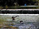 Swimming on Barton Creek by Cathy Jones