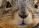 Whiskers by Betsy  Seeton