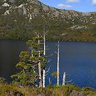Pencil Pines... Dove Lake. by Richard  Stanley