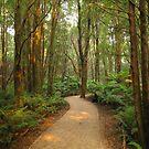 Magical forest by Kasia  Kotlarska