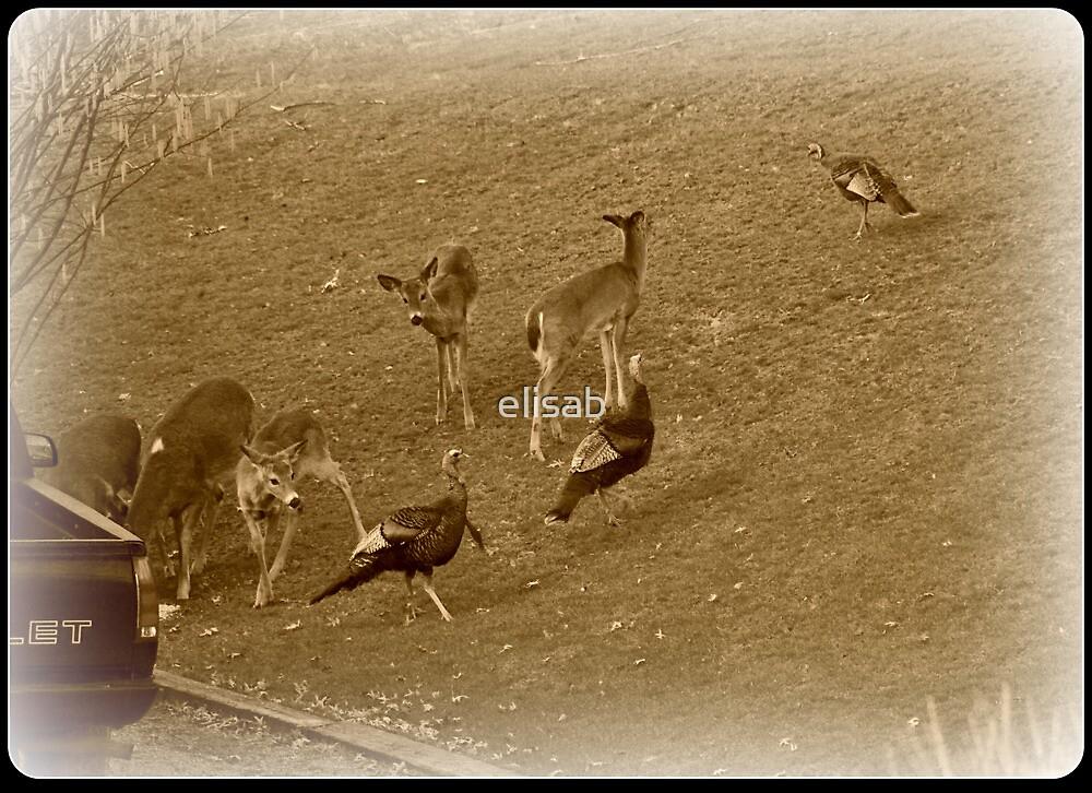 Feeding the Deer by elisab