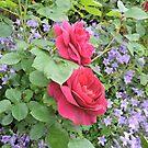 Fuschia Lilac Smile by CreativeEm
