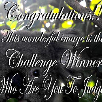 Winner banner  by MaKay