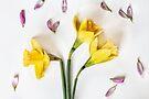 Spring flowers by Sara Sadler