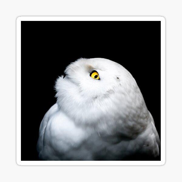 Winter White Snowy Owl Portrait Sticker