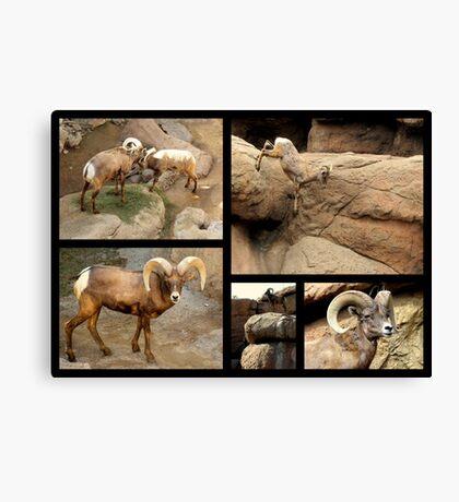 Bighorn Sheep ~ Collage Canvas Print