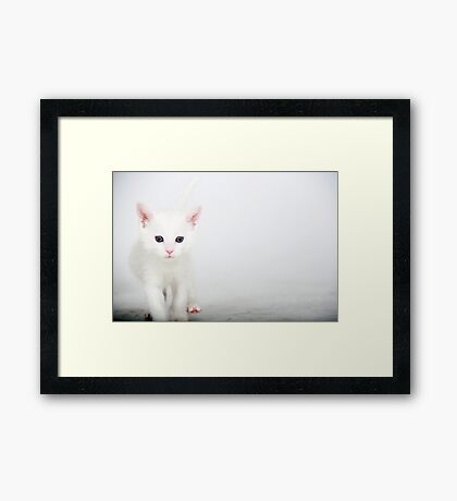 Little Itty Bitty Kitty..... Framed Print