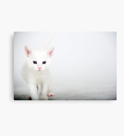 Little Itty Bitty Kitty..... Canvas Print