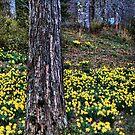 """A Little Spring Sunshine"" by Melinda Stewart Page"