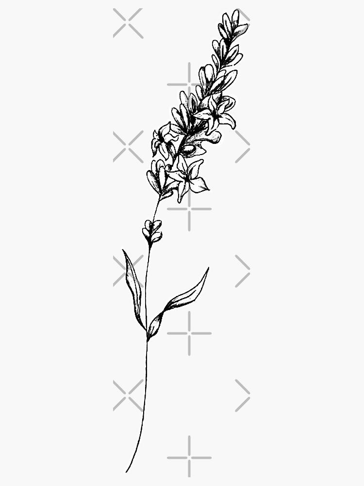 Lavender Illustration by joannekatarina