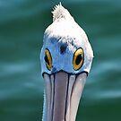 Look me in the eye Pelican by bazcelt