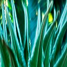 Fronds #02 by LouD