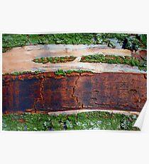 Destruction of the Rain Forest (Ariel View) Poster