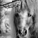Mini Stallion  by Dana Harvey