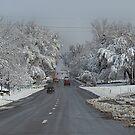 Spring Storm - Colorado by Barb Miller