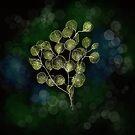 Tree of life. by cardwellandink