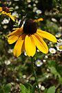 wildflower by Richard Williams