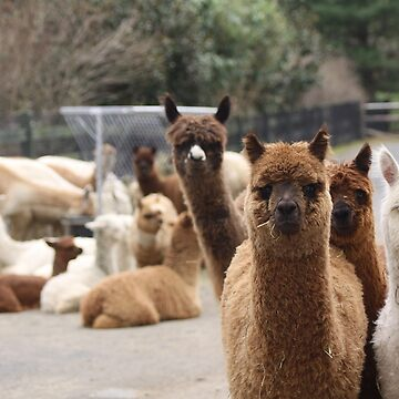Alpaca Farm by eelsblueEllen