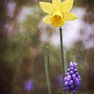 Spring Duet von Caitlyn Grasso