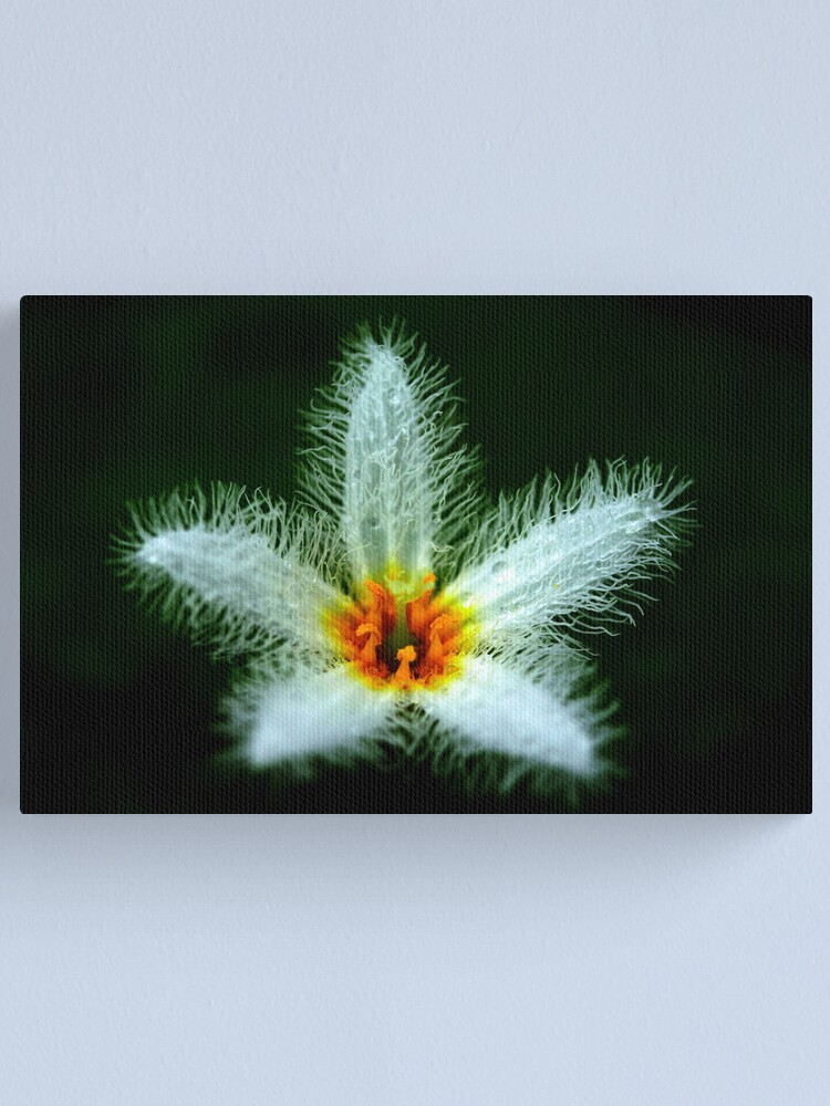 Alternate view of Nymphoides indica Canvas Print