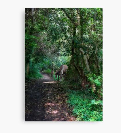 Forest Ponies Canvas Print