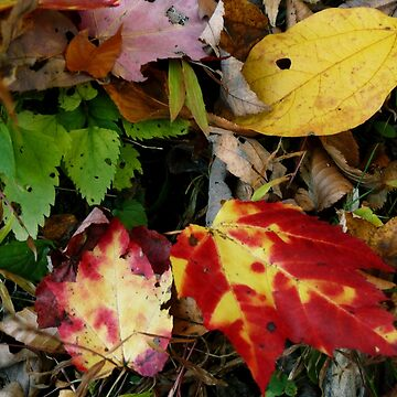 #621 Autumn Leaves by MyInnereyeMike