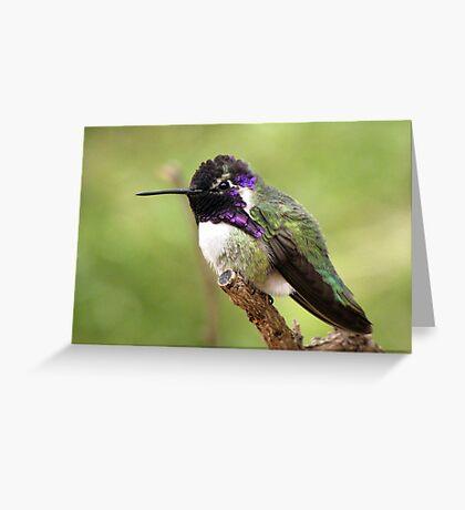 Costa's Hummingbird ~ Male II Greeting Card