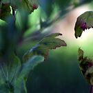 Spring Greens by Merice  Ewart