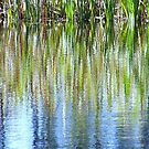 Reflecting Reeds by Len Bomba