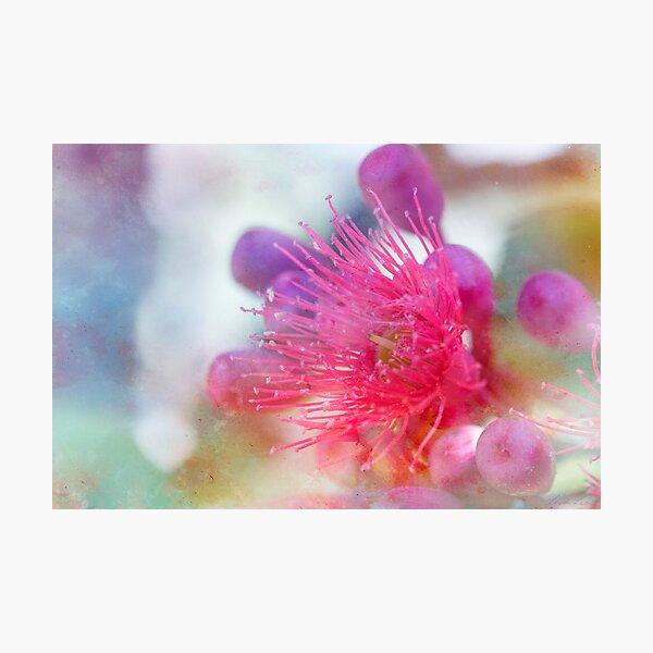 Gum Blossom Photographic Print