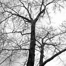 Winter Tree by Lyccid