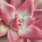 Pink Echeveria by Karin Elizabeth