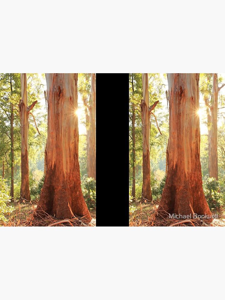 Dawn Gums, Dandenongs, Australia  by Chockstone