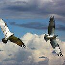 Osprey Family Flight by byronbackyard