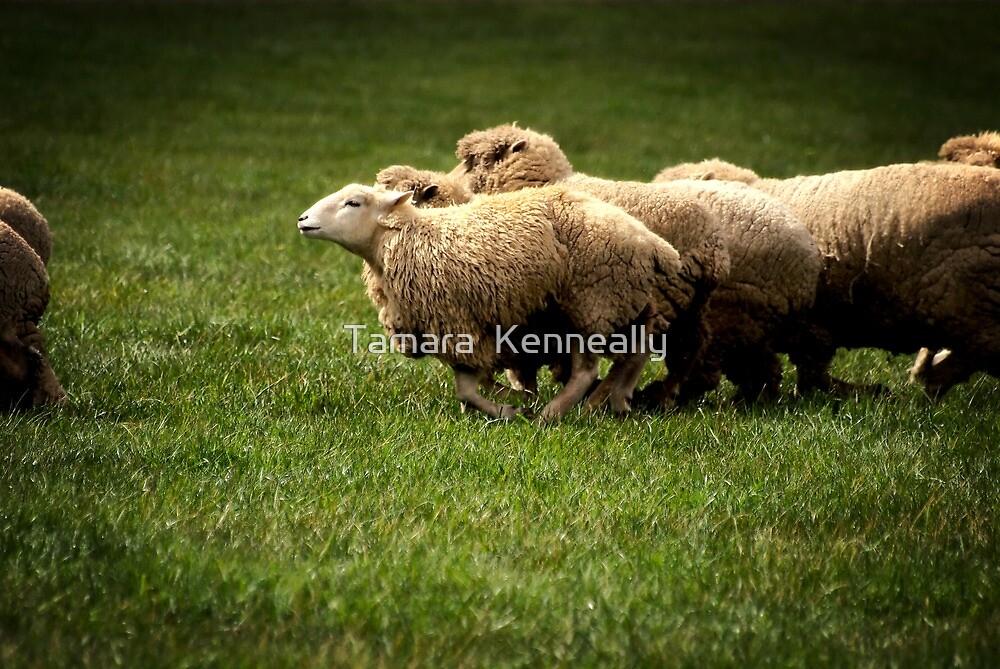 Running Sheep by Tamara  Kenneally