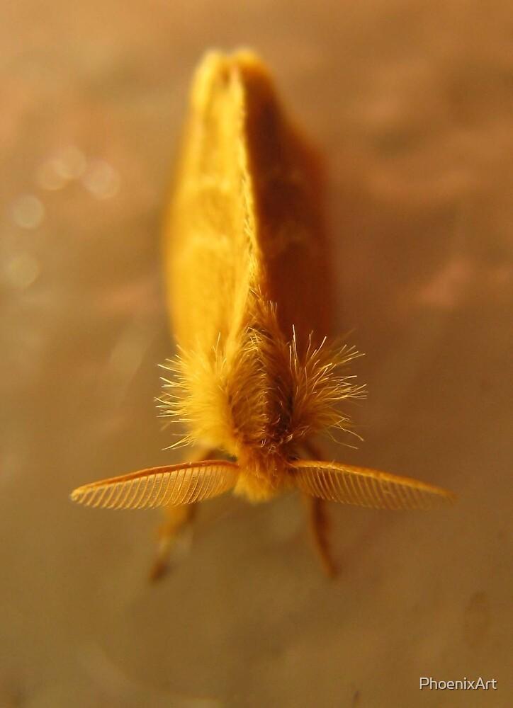 Little Golden Moth by PhoenixArt