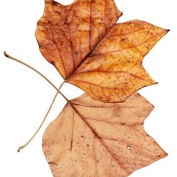2 Blätter im Herbst von Gourmetkater