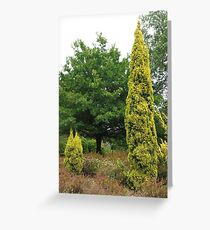 Conifers (5649) Greeting Card