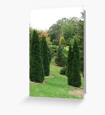 Conifers (5697) Greeting Card