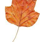 1 Blatt im Herbst von Gourmetkater