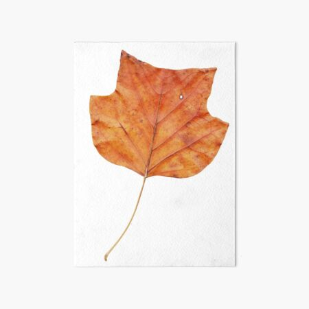 1 Blatt im Herbst Galeriedruck